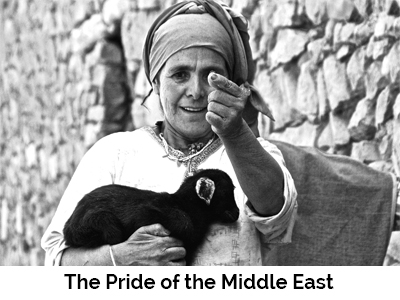 The Pride of the Middle East